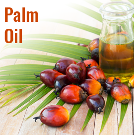 Palm Oil Buyers