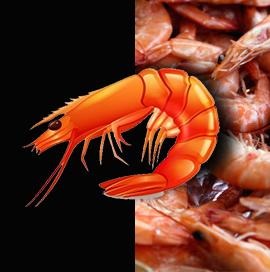US Shrimp Imports