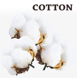 Kazakhstan Cotton Export