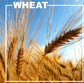 Ukraine Wheat Exports