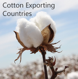 Cotton Export Data