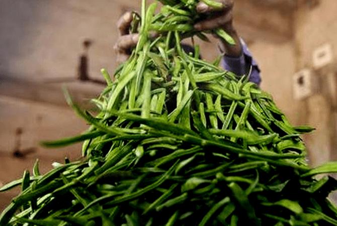 Guar-Gum Exporters