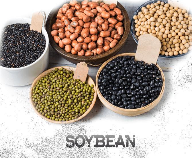 US Soybean Export
