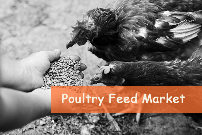 Poultry Feed Trade
